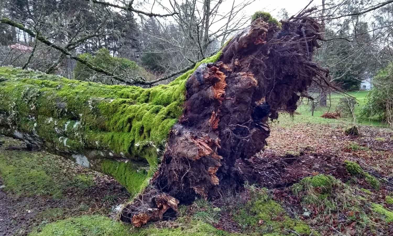 Storm damage last February