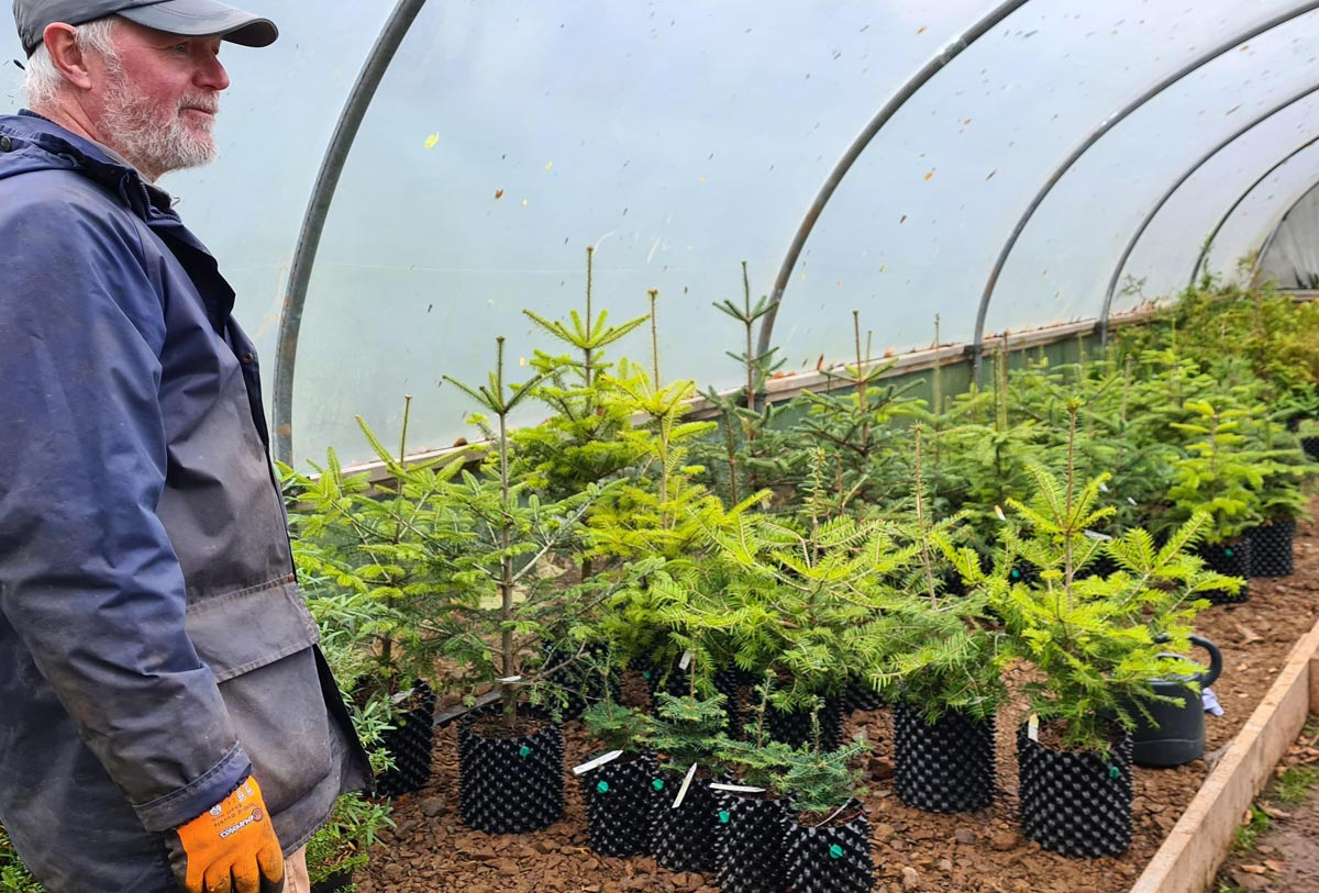 Young conifers in our nursery