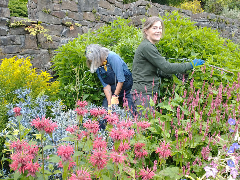 Isabel and Rosemary get stuck in to the herbaceous border